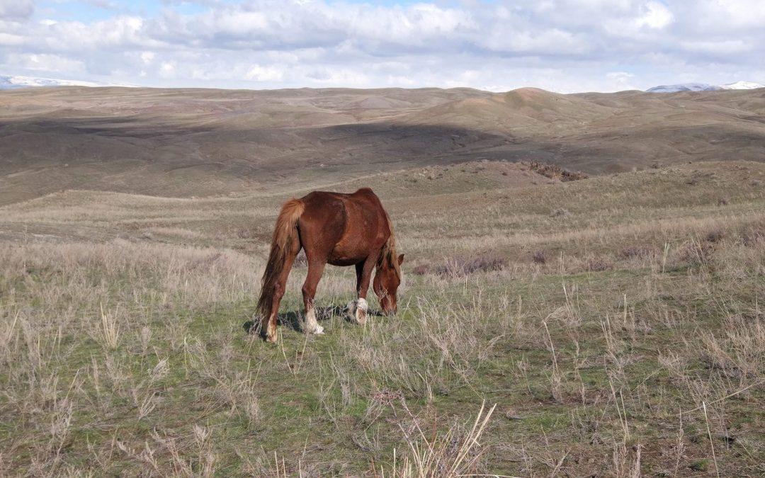 Potopisno predavanje Roka Škrlepa: Kazahstan, 10. januar 2018